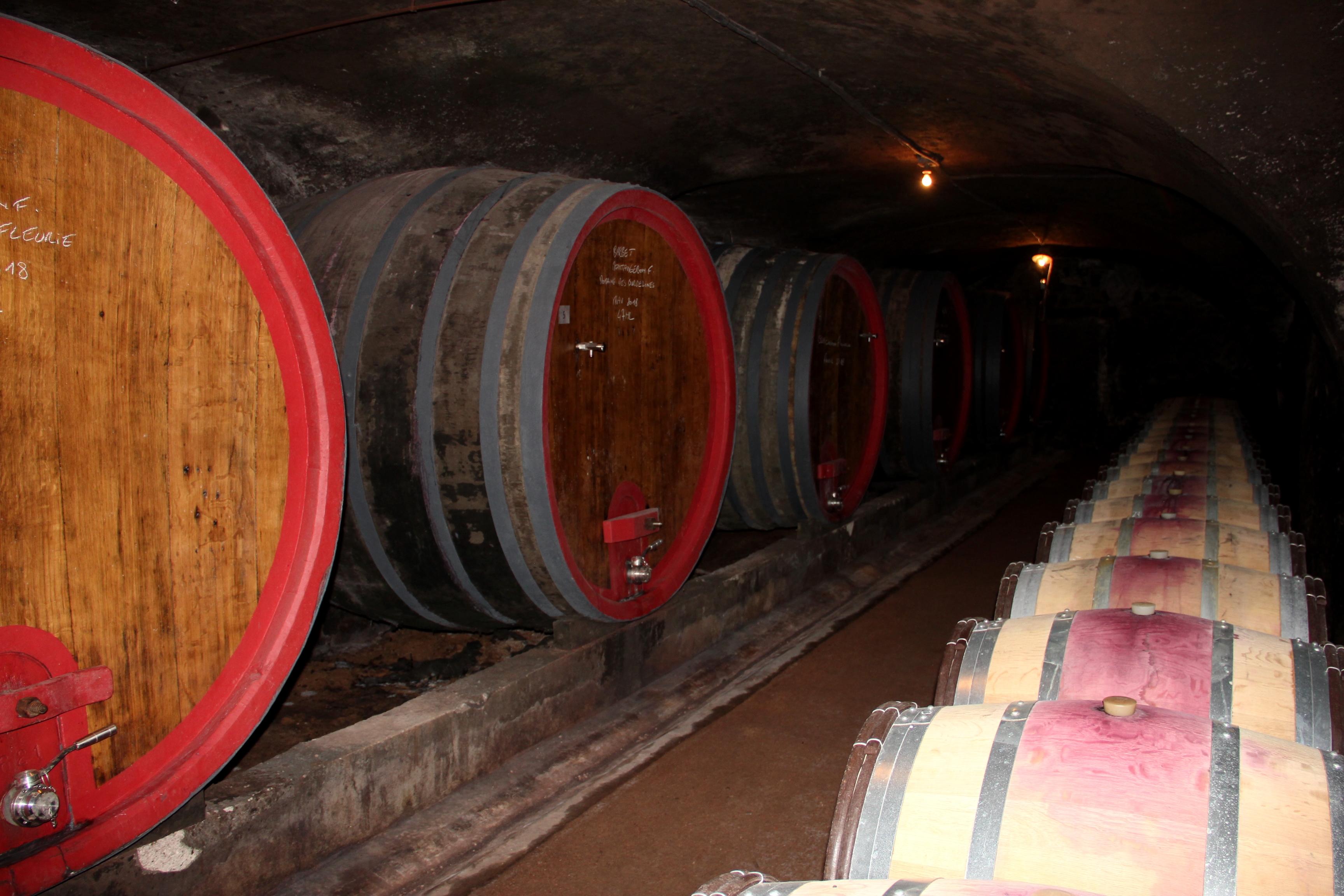 Dans les Caves de la Maison Jean Loron